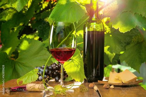 czerwone-wino-na-tle-lisci-oswietonych-promieniami-slonca