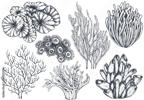 Fototapeta Vector collection of hand drawn ocean plants and coral reef elements