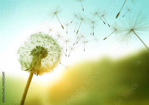 Foto op Plexiglas Paardenbloem Dandelion seeds blowing in the wind across a summer field background, conceptual image meaning change, growth, movement and direction.