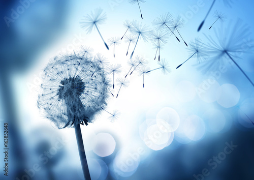 Fotografie, Obraz  Dandelion In The Wind