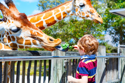 Fotografie, Obraz  Little kid boy watching and feeding giraffe in zoo