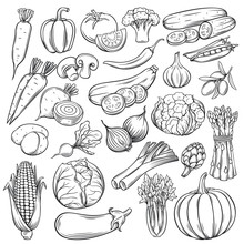 Vector Hand Drawn Vegetables I...