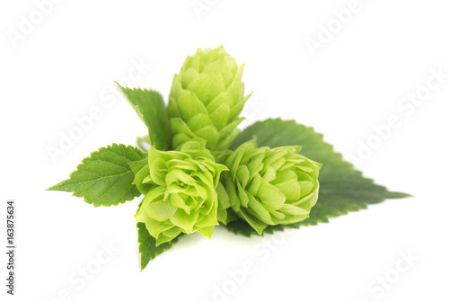 Fotografía  Fresh green hop branch, isolated on white background