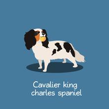 Cavalier King Charles Spaniel Dog Illustration Design