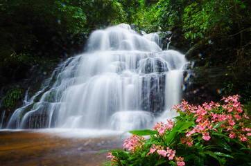 Panel Szklany Mandang waterfall ,Thailand,flower