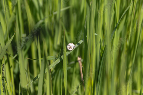 Fotografie, Obraz  Nautilus is sitting on a branch against the background of a green field