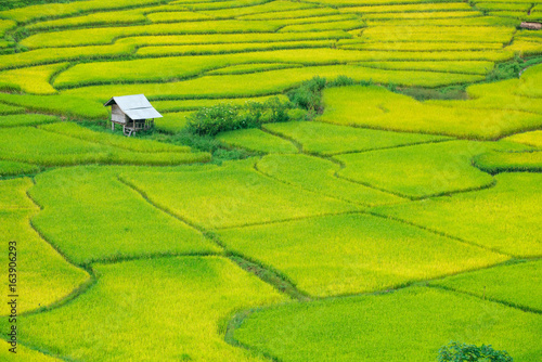 Fotobehang Rijstvelden Green Terraced Rice Field in Nan, Thailand.
