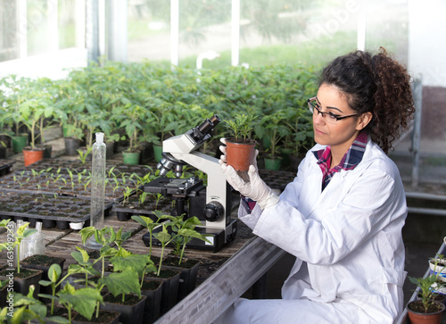 Fotografia  Biologist holding pot with sprout