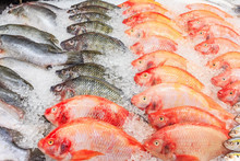 Frozen Nile Tilapia Fish In A ...