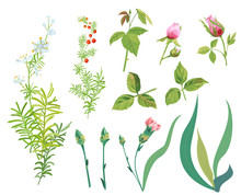 Collection Branches Asparagus With White, Blue Small Flowers, Red Berries, Green Leaves Isolated. Pink Roses And Carnation Buds, Leaves. Digital Draw, Realistic Vector Illustration For Design