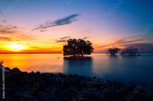 Foto op Plexiglas Crimson dead tree by the sea with the beautiful morning sun.