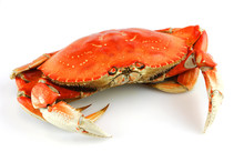 Single Steamed Crab Isolated O...