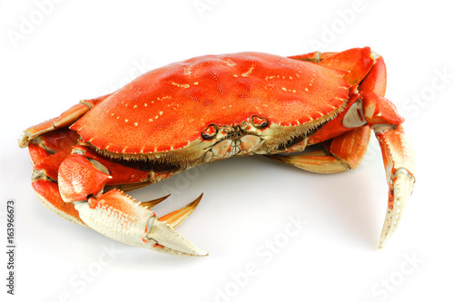 single steamed crab isolated on white background Canvas Print
