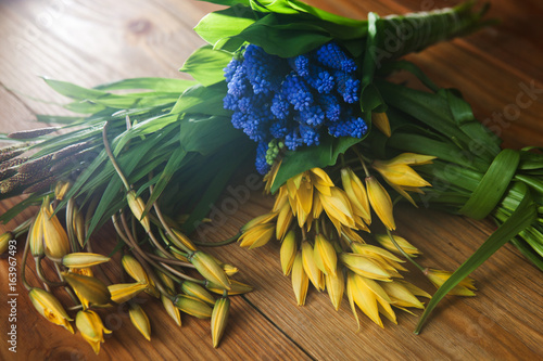 Colorful Spring Flowers Top View Closeup Yellow Tulips Blue