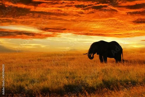 Lonely Elephant against sunset in savannah. Serengeti National Park. Africa. Tanzania.