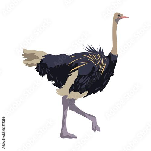 Fotografía ostrich birds of savannah african fauna wildlife in tropics