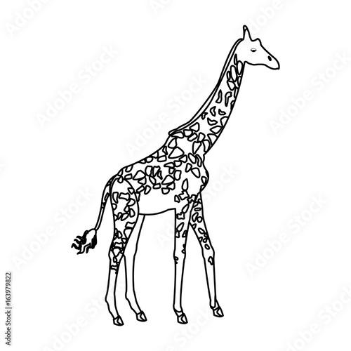giraffe animal herbivore african wildlife Poster