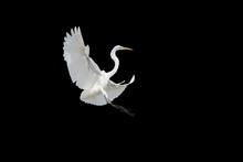 Bird Flying On Black Backgroun...