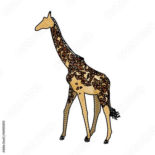 giraffe animal herbivore african wildlife vector illustration Poster