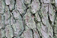 Rustic Tree Bark Texture One