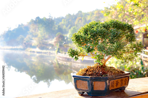 Small bonzai plant tree on the morning.