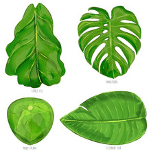 Plant Leaves Pack (Monstera, Fiddle Fig, Money Plant & Elephant Ear)