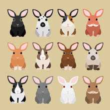 Cute Rabbit Coloring Variations
