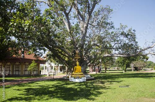 In de dag Palermo Gold buddha statue in garden at outdoor