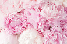 Beautiful Pink Peony Flower Ba...