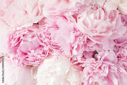 Leinwand Poster beautiful pink peony flower background