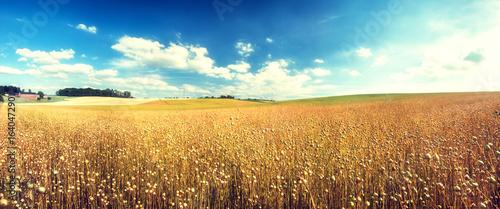 Foto auf Gartenposter Landschappen Agricultural landscape with flax seed field. Nature background