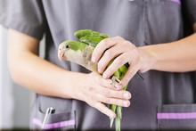 Veterinarian Doctor Is Making ...