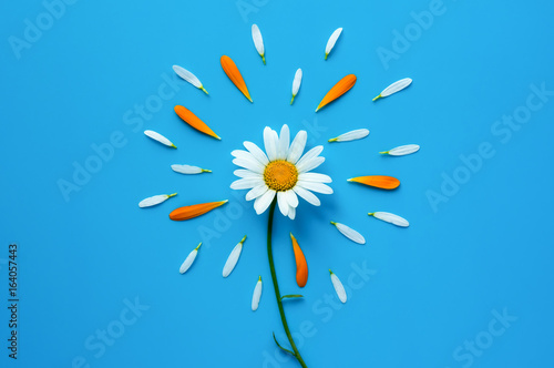 Chamomile flower on blue background. White and orange petals decoration. Flat minimal design.