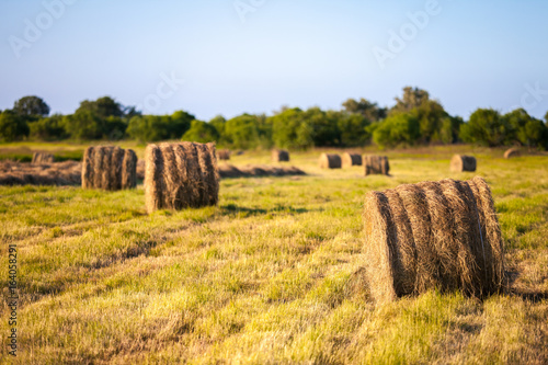 Valokuva  Hay stacks in the field