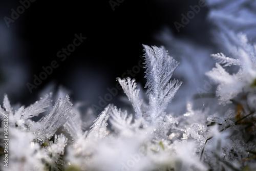 Fotografie, Obraz  Eisblumen, Eiskristalle in frostiger Winterlandschaft