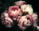 Fototapeta Kwiaty - Beautiful bouquet of pink roses, flowers on a dark background, soft and romantic vintage filter, looking like an old painting