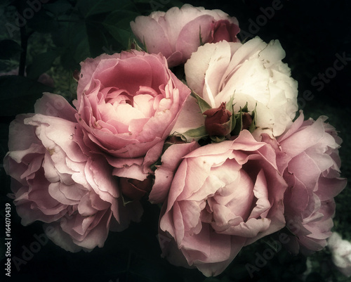 Staande foto Retro Beautiful bouquet of pink roses, flowers on a dark background, soft and romantic vintage filter, looking like an old painting