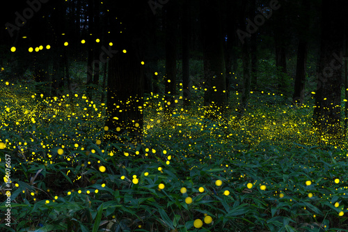Many fireflies flying in the forest