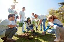 Group Of Volunteers Planting T...