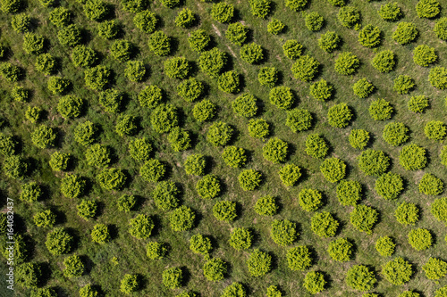 Fotografía aerial view of the orchard