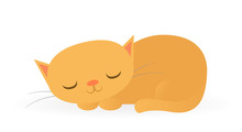 Sleeping Orange Cat