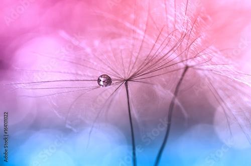magiczne-abstrakcyjne-ujecie-nasion-mniszka-lekarskiego-w-pastelowych-tonacjach