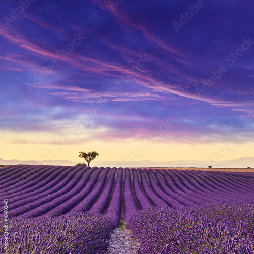 Spoed Foto op Canvas Snoeien Lavender field summer sunset landscape