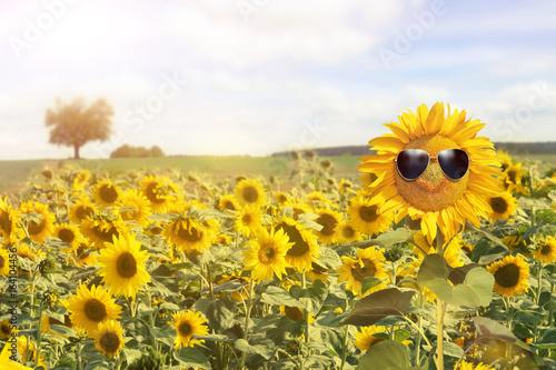 Fotobehang Zwavel geel Sonnenblume mit Sonnenbrille