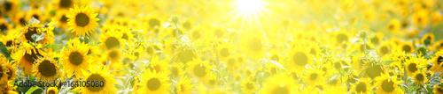 Poster Jaune Wunderschöne Sonnenblumen
