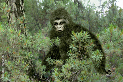 Bigfoot, Yeti. Canvas Print
