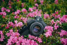 Old Film Photo Camera Lie On The Green Grass In Pink Flowers