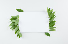 Top View Of Blank Card With Fresh Green Leaves Isolated On White