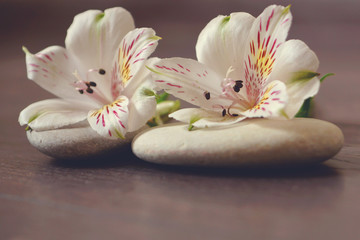 Obraz na płótnie Canvas Stones for massage with white flowers of alstroemeria lie on a wooden surface, preparation for spa procedures