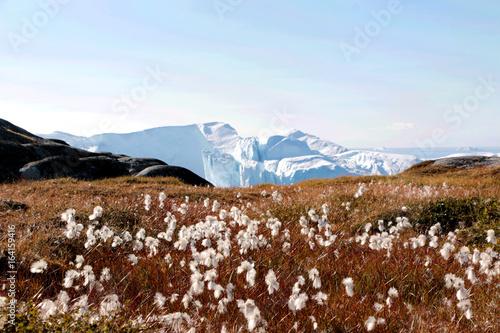 bialy-kwiat-z-gora-lodowa-w-ilulissat-grenlandia-jakobshavn